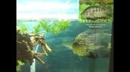 Подводен свят - 12