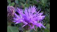 Тоника - Чудно цвете