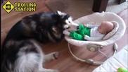 Смешни Кучета закрила на бебетата Компилация 2014