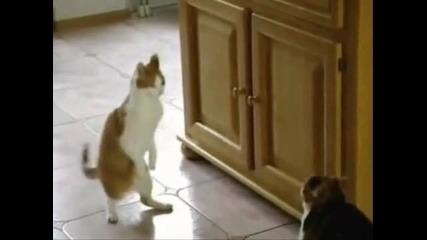 Смешна танцуваща котка