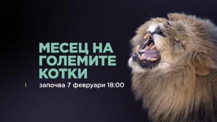 Месец на Големите Котки | NG Wild Bulgaria
