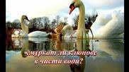 Бели лебеди ... (с поезията на Ясен Ведрин) ... (music Giovanni Marradi) ... ...