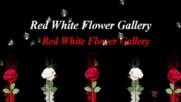 Бяло - червена галерия!
