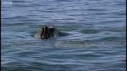 Гърбатия кит