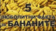 5 любопитни факта за бананите