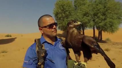 Ловът с орли се провежда само с обучени птици (