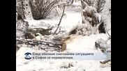 След обилния снеговалеж ситуацията в София се нормализира