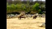 Носорози Правят Секс Дзъма