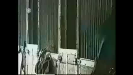 Super funny video