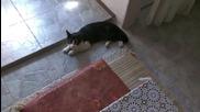 Моето коте Марти