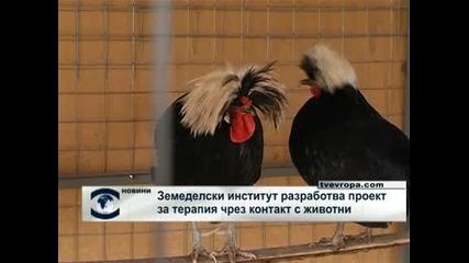 Земеделски институт разработва проект за терапия чрез контакт с животни