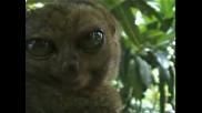 Яко смях - Опулените очи на малко животинче