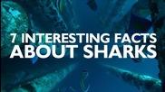 7 интересни факта за акулите