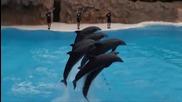 Невероятни делфини със страхотни умения