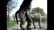 Маймуни се гаврят с шофьор на кола