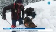 ОПАСНОСТ ОТ ЛАВИНИ: В страната има 10 обучени кучета спасители
