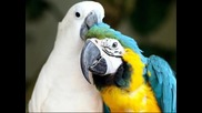егзотични птици