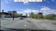 Кучета, които пресичат на пешеходна пътека ..