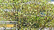 La Varenne Saint Hilaire Debut Avril 2016