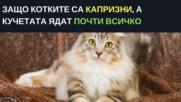 Защо котките са капризни а кучетата ядат почти всичко
