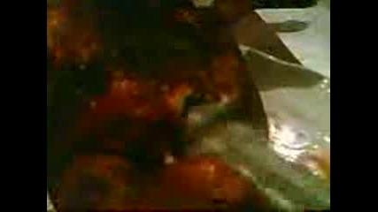 Изнасилване На Печено Пиле
