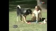 Куче перверзник :d