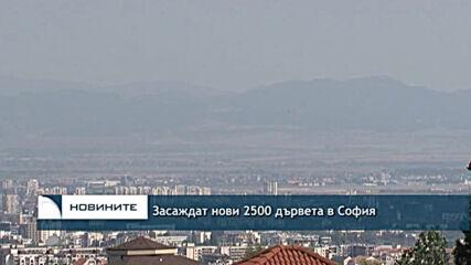 Засаждат нови 2500 дървета в София