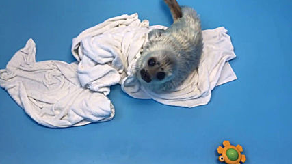 Love at first bite! Rescued seal pup tastes fish for first time