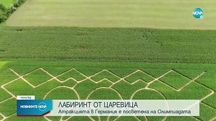Олимпийски лабиринт в царевична нива в Германия