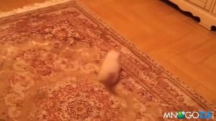 Коте го е страх от килима