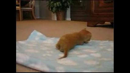 Малко Коте Прохожда