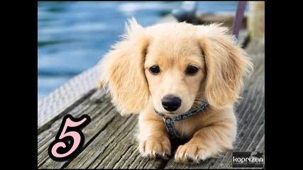 Кое е най-сладкото животно