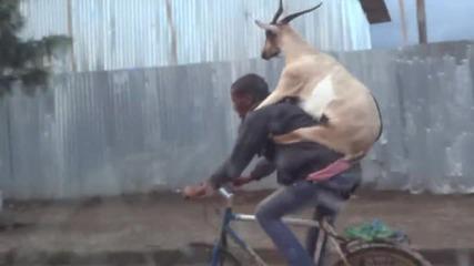 Коза се вози на колело