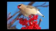 Gilbert Becaud - Le petit oiseau de toutes les couleurs