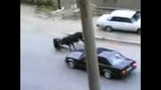 М П С - Бикоборци от Баку ! Бик vs Идиоти на Автомобили