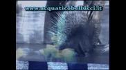 Cirk Aquatiko bellucci