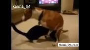 Котка Прави Свирки На Куче :)