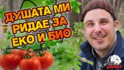 Щастливите кокошки и хора се хранят с БИО зеленчуци и ЕКО продукти