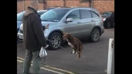 Куче балансира на верига