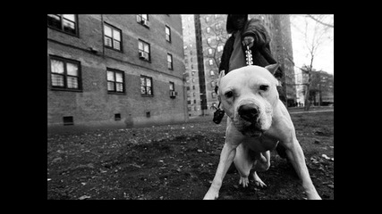 Big Dunn Feat. Don Tony - От кучето с любoff