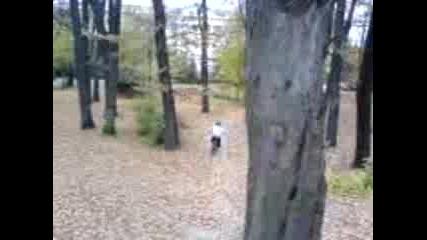 V Borisovata 2 (yavkata)