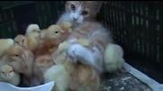 Най-сладкото видео