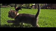 Летящи котки в забавен кадър