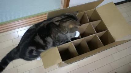 Дебелия Мару, и кутията, в която той не може да влезе.