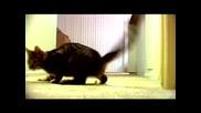 Посретствената Песен За Котето