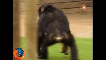 Енциклопедия На Животните - Примат Бг Аудио Високо Качество Tv Rip