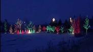 Удивителни Коледни Светлини