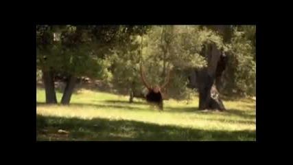 La Toya Jackson - Home **official Video**