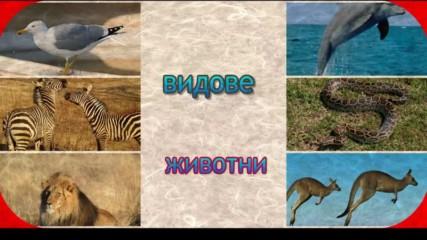 видове животни
