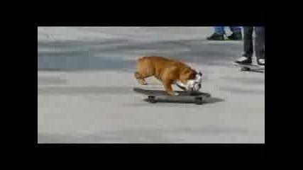 Куче - Скейтър